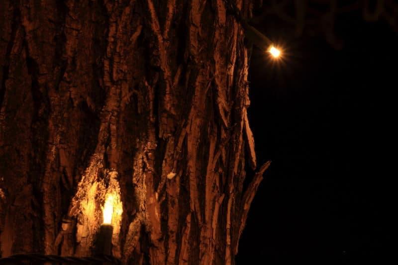 Linda Williams - Tree Lights