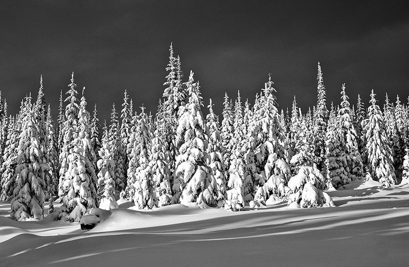 Robert-Stenner-Snowy-Trees
