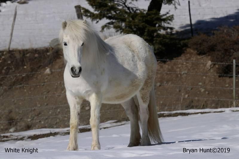 Bryan-Hunt-White-Knight
