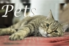 @Pets