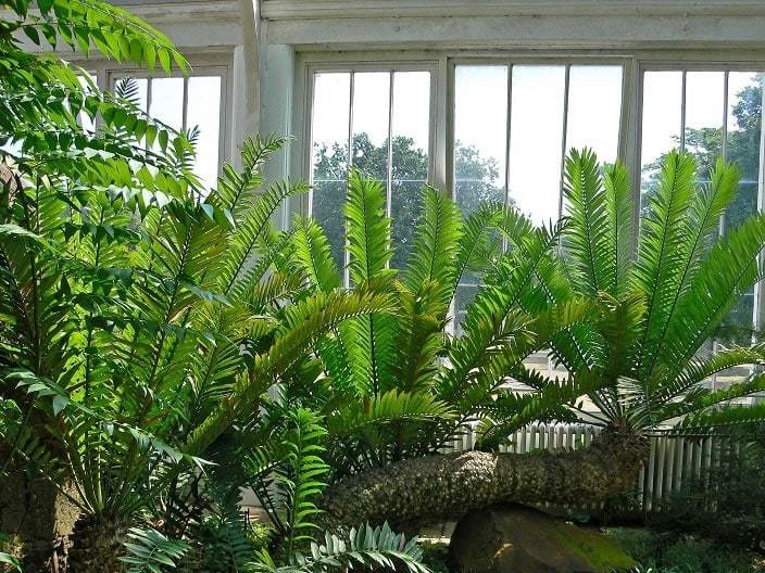 16 Ferns in Palm House at Kew