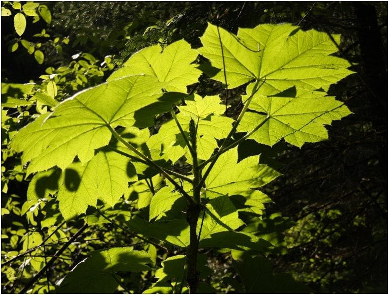 Christine-Overland-Forest-Sunlight-Revelstoke-BC