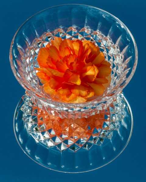 David-Williams-1-Begonia-in-Small-Crystal