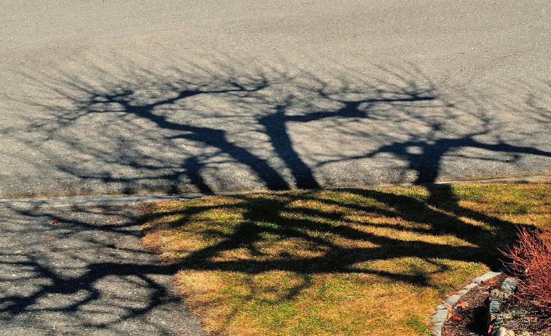 Robert-Nowland-Tree-Reflection