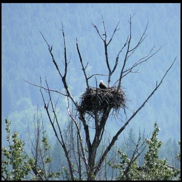 Christine-Overland-1Eagles-Nest