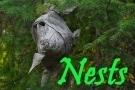 @Nests