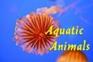 1-Aquatic-Animals