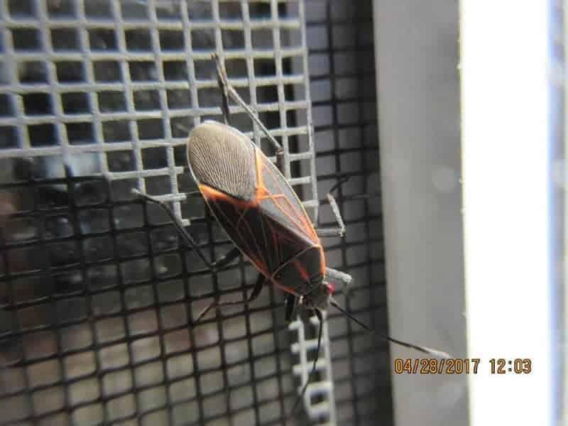 Joe-Warman-Bug