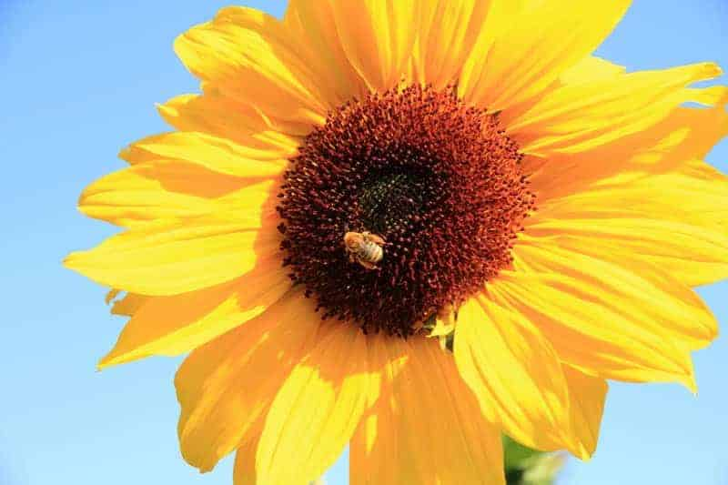Linda-Williams-Fowers-and-Honey-Bees