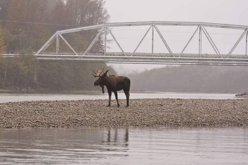 Klaus Hamilton - Bull Below the Bridge