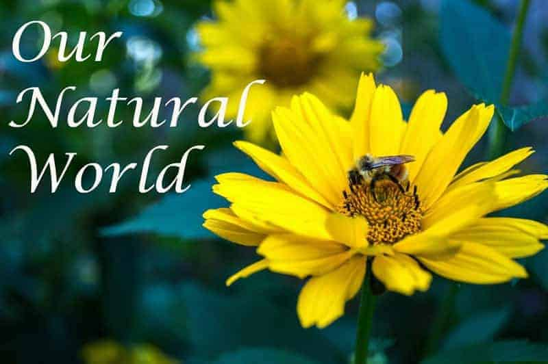 @ Our Natural World