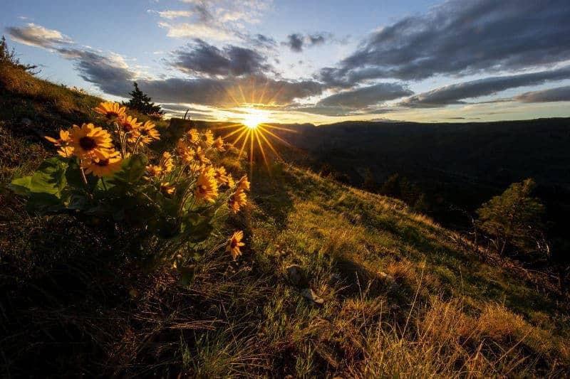 Norm Dougan - 2 North Thompson Sunrise