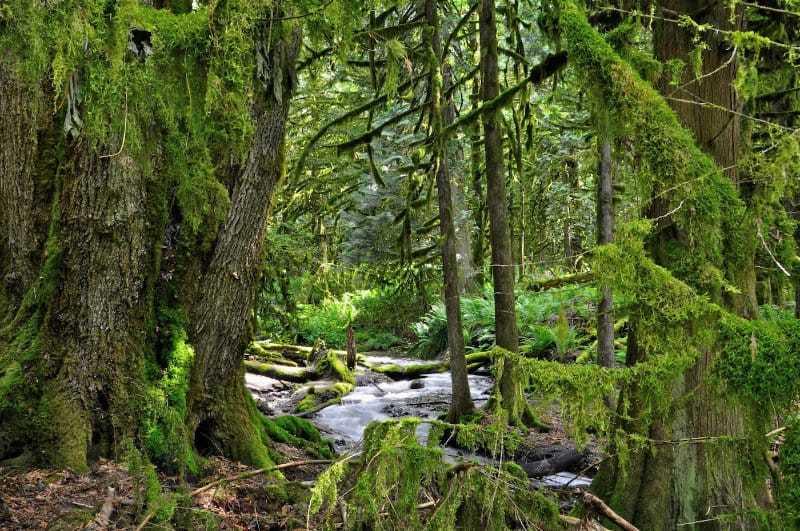 Barb Klie - 5 Bridal Veil Falls Forest