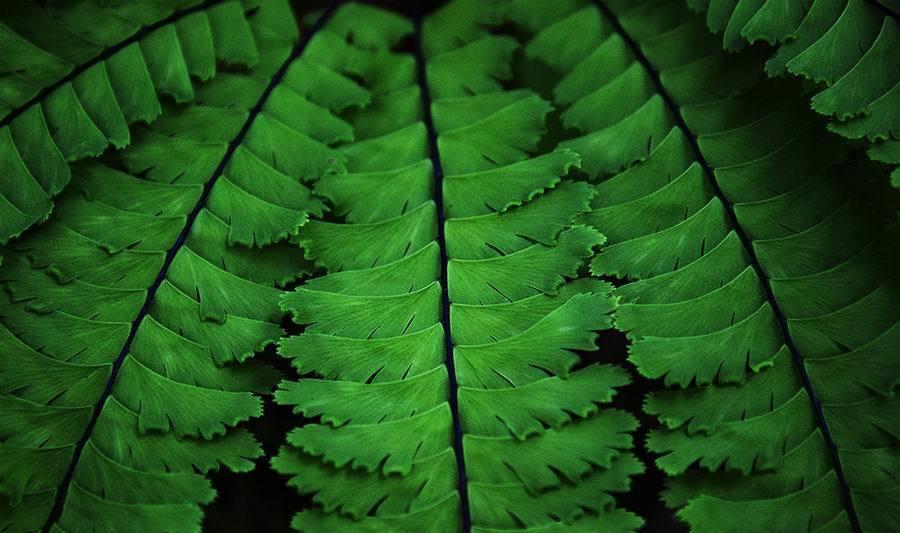 Romi Kokobun_Revelstole leaves